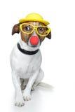 rolig hund Arkivbild