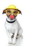 rolig hund royaltyfri foto
