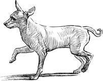 Rolig hund Arkivfoto
