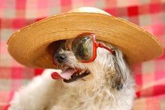 rolig hund royaltyfria bilder