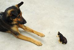 Rolig hund Arkivbilder