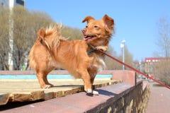 rolig hund Royaltyfri Fotografi