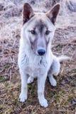 rolig hund Fotografering för Bildbyråer