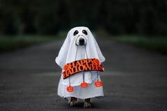 rolig hund i en spökedräkt med ett lyckligt halloween tecken royaltyfri bild