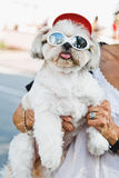Rolig hund med exponeringsglas Arkivbilder