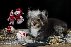 Rolig hund på helgdagsafton för ` s för nytt år Arkivfoton