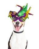Rolig hund som kläs för Mardi Gras arkivbild