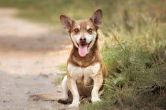 Rolig hund som ler och sitter på gräs Arkivbild