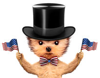 Rolig hund som rymmer USA flaggan Begrepp av 4th Juli Fotografering för Bildbyråer