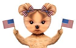 Rolig hund som rymmer USA flaggor Begrepp av 4th Juli Arkivbild