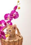 rolig isolerad kattunge little som är vit Arkivfoto