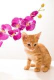 rolig isolerad kattunge little som är vit Arkivbilder