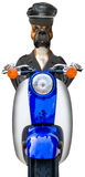 Rolig isolerad motorcykelcyklisthund Arkivbilder