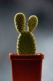 rolig kaktus Royaltyfri Foto