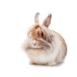 Rolig kanin Arkivfoto