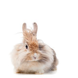 Rolig kanin Royaltyfria Bilder