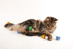 rolig katt Fotografering för Bildbyråer
