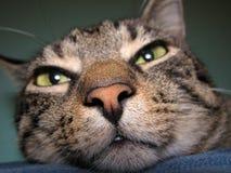 rolig katt Arkivfoton