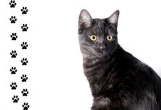 rolig katt Arkivbilder