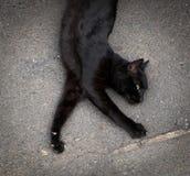 rolig katt Djur från madeira arkivfoton