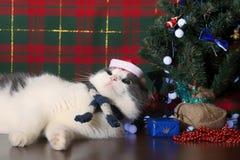 Rolig katt i det Santa Claus locket som ligger under trädet för nytt år Royaltyfri Fotografi