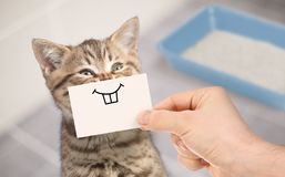 Rolig katt med det galna leendet som sitter nära ren toalett arkivfoto