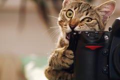 Rolig katt med en kamera arkivbild