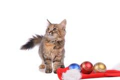 Rolig katt med jultoys Arkivfoton