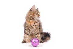 Rolig katt med jultoys Royaltyfri Bild