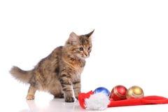 Rolig katt med jultoys Royaltyfria Bilder