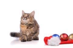Rolig katt med jultoys Arkivfoto