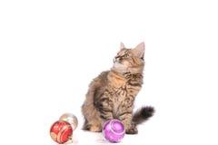 Rolig katt med jultoys Arkivbild