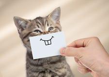 Rolig katt med leende på papp royaltyfri fotografi