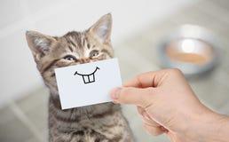 Rolig katt med leende på papp som sitter nära mat royaltyfria foton