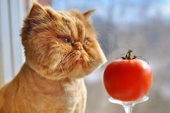 Rolig katt och röd tomat Royaltyfri Foto