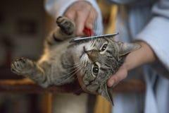 Rolig katt som ser till kameran royaltyfri foto