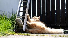 Rolig katt som spelar på trädgården stock video