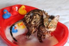 Rolig katt som tar ett bad arkivfoto