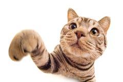 rolig kattunge Arkivfoto