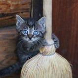 rolig kattunge Arkivbilder