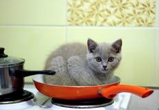 rolig kattunge Royaltyfri Foto