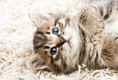 rolig kattunge för matta Royaltyfri Fotografi