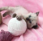 Rolig kattunge som ligger med skeins Arkivbilder