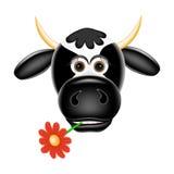 Rolig ko med en blomma i tänder Arkivbild