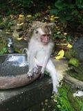 Rolig liten apa i parkera i sommaren Fotografering för Bildbyråer