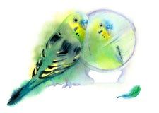 Rolig liten grön papegoja för vattenfärg Fotografering för Bildbyråer