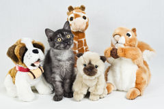 Rolig liten katt bland keliga Toys Fotografering för Bildbyråer
