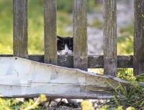 Rolig liten kattunge som fearfully bakifrån kikar ett gammalt trä royaltyfria foton