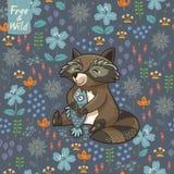 Rolig liten tvättbjörn Arkivfoto