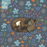 Rolig liten tvättbjörn som sover i en äng Arkivbilder